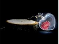 Sevgiliye Hediye Yaşayan Kolye